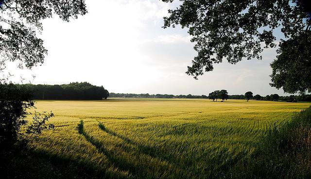 Foto: Van der Laan fotografeert (cc)